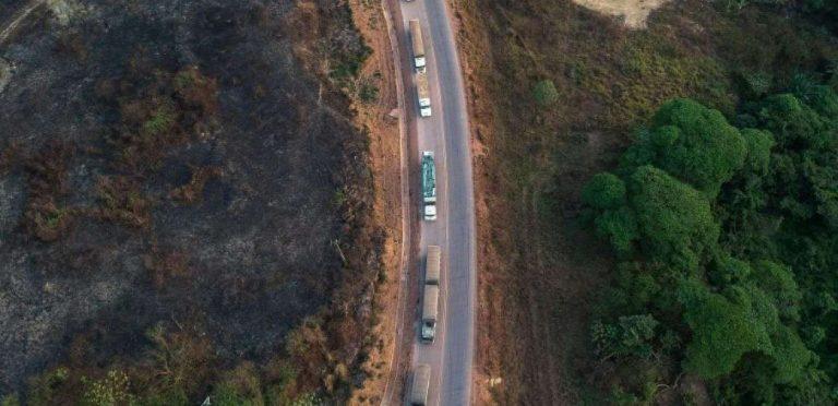 Brésil: la déforestation a plus que doublé en Amazonie en un an  | Le blob, l'extra-média
