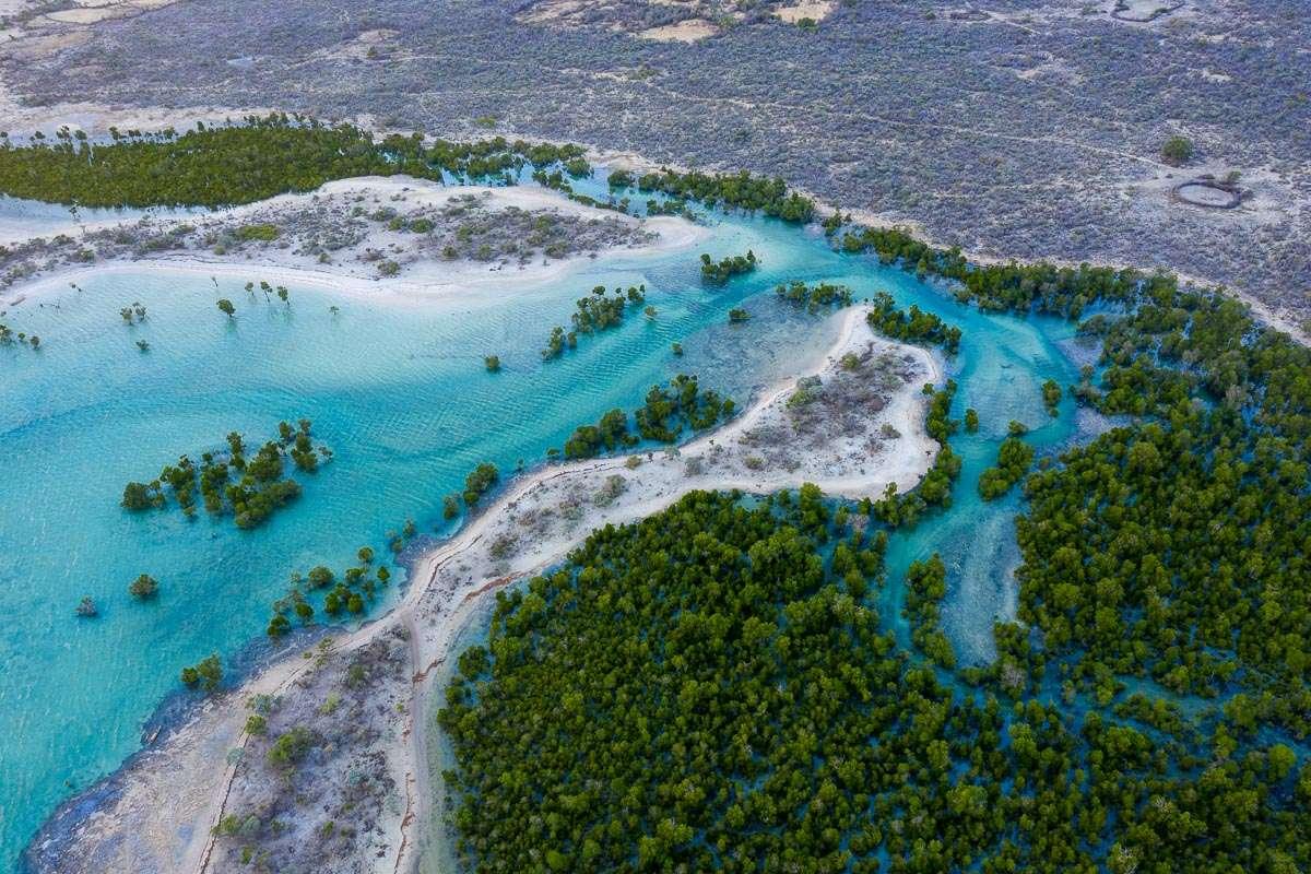 Du bleu au vert : défendre les solutions climatiques côtières