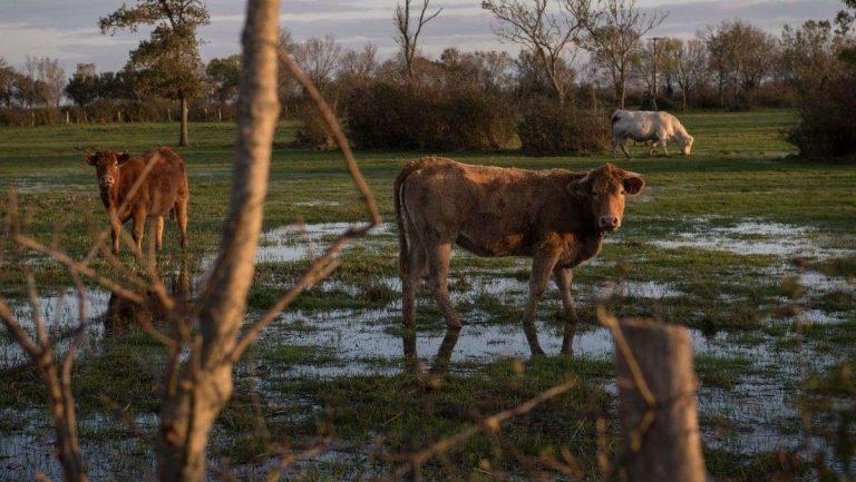 Face au changement climatique, la formation des agriculteurs de demain est-elle adaptée ?
