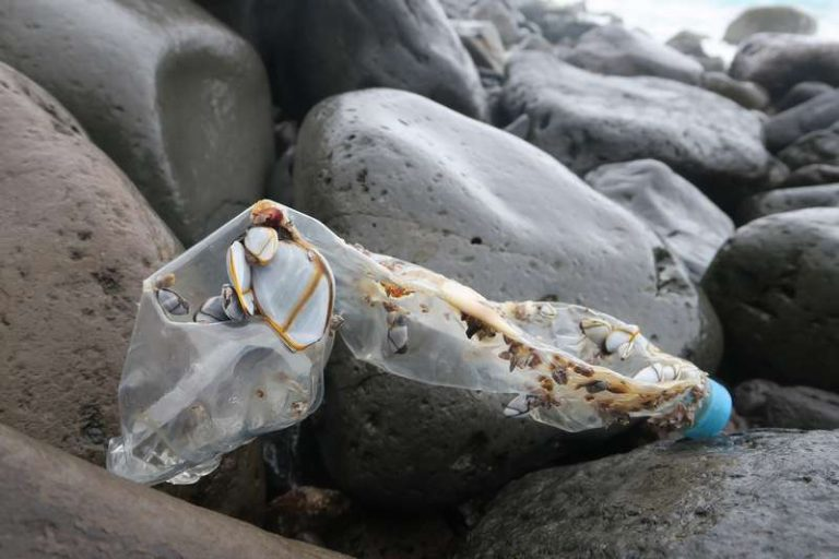 Ils ont réussi à décomposer du plastique en produits chimiques utiles