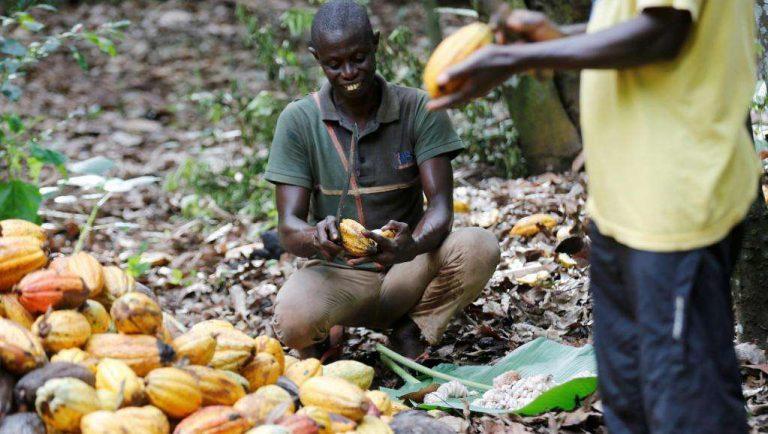 Invité Afrique – Cacao: le travail des enfants «est un problème de politique publique, de pauvreté»