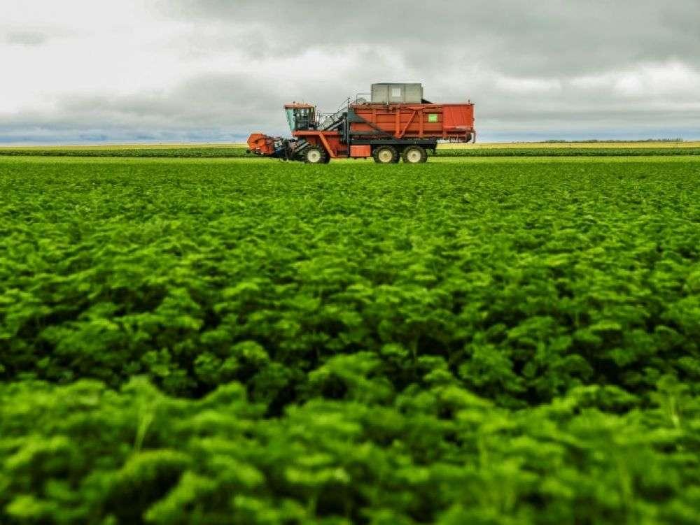 Près de 14% des aliments sont perdus entre la ferme et le supermarché