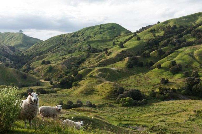 Réchauffement climatique : changement de paradigme en Nouvelle-Zélande ?