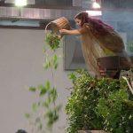 Utiliser librement des Préparations Naturelles en alternative aux pesticides : toujours pas possible en 2019 !