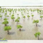 Au Sénégal, 152 millions d'arbres plantés dans la mangrove du delta de Casamance