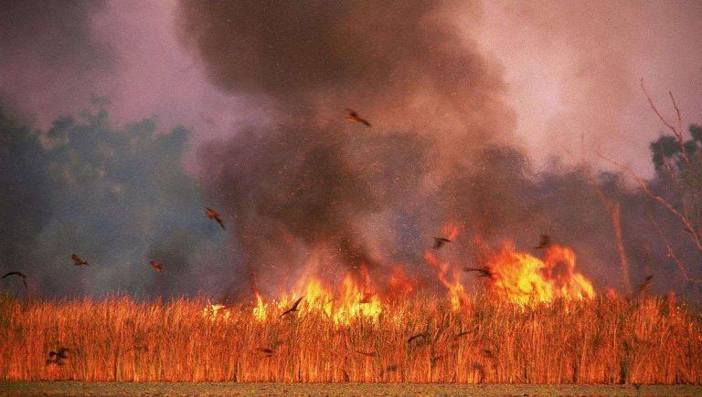 Australie : quelles conséquences pour la biodiversité ?
