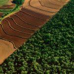 Changement climatique : comment absorber le CO2 présent dans l'atmosphère ?