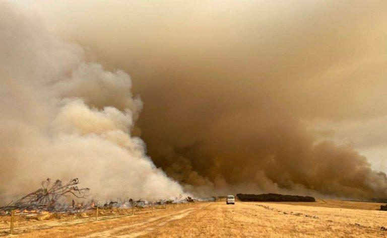 Changement climatique : les incendies en Australie vont dégrader l'écosystème pour toujours