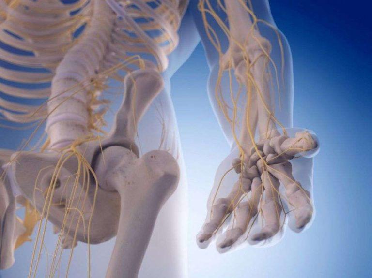 Des chercheurs ont réussi à faire repousser un nerf avec des polymères et des protéines
