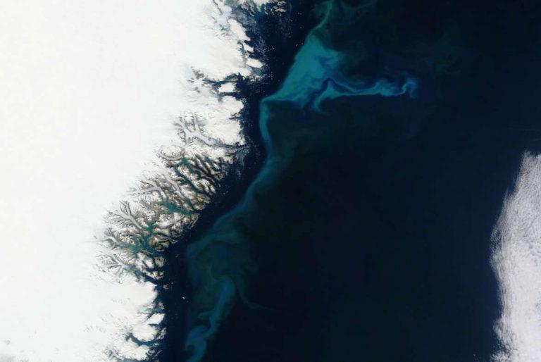 Favorable à la vie marine, l'effet fertilisant des icebergs pourrait augmenter à l'avenir