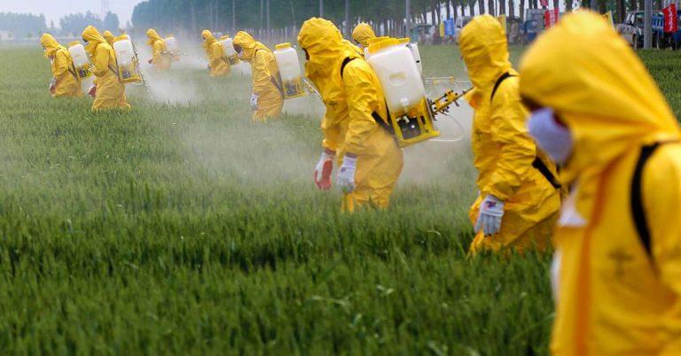 France : l'Agence sanitaire annonce le retrait de 36 produits à base de glyphosate.