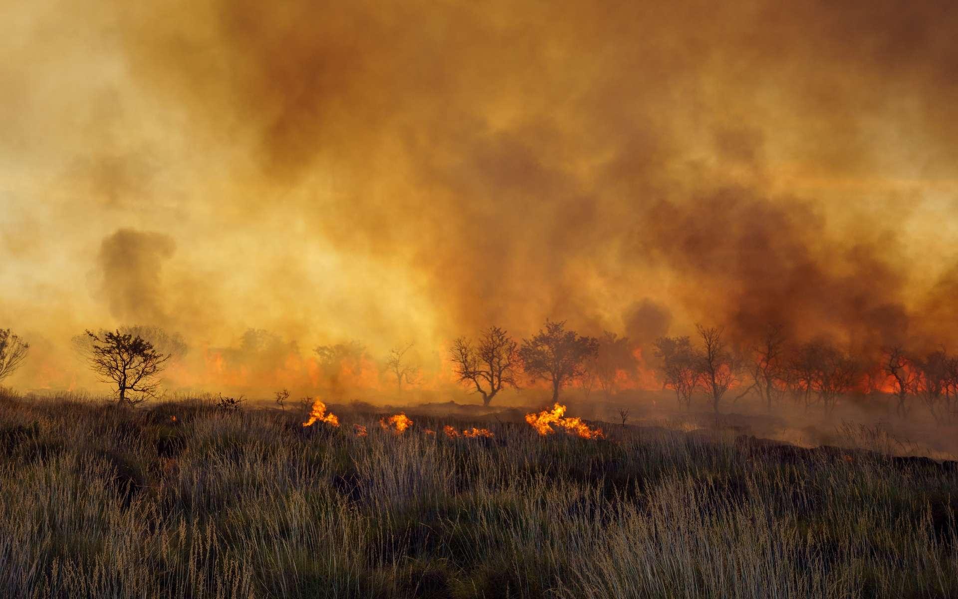 Incendies en Australie : probablement des milliards d'animaux sont morts