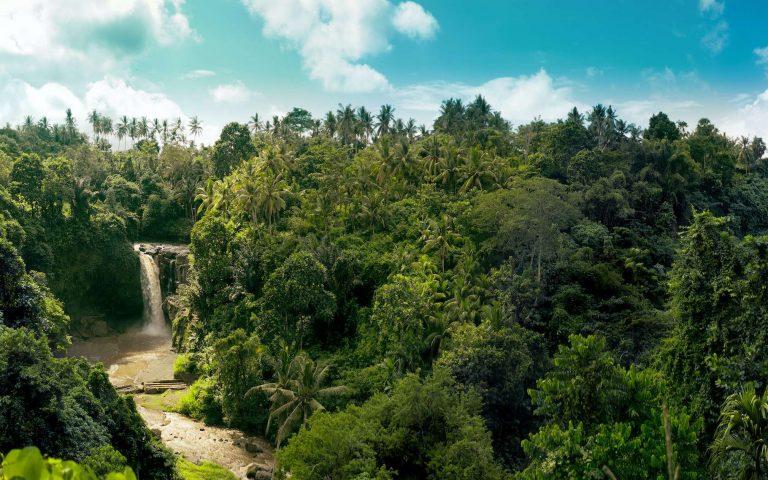Les forêts tropicales, un puits de carbone 6 fois plus important que prévu