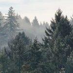 Mille milliards d'arbres – Le Forum Économique Mondial lance un plan pour venir au secours de la nature et du climat