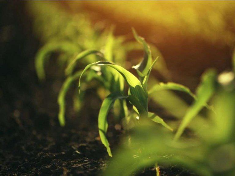 Perfectionner la photosynthèse pour nourrir 10 milliards de personnes en 2050