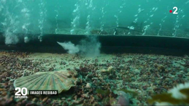 VIDEO. Pour lutter contre la pollution et contre le bruit, des scientifiques développent des «rideaux de bulles» sous l'eau
