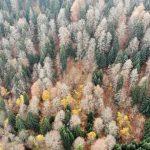 En Turquie, 11 millions d'arbres plantés en novembre sont presque déjà tous morts