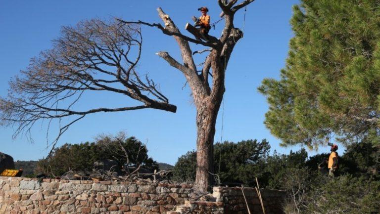 Planter des arbres en ville, une (fausse) bonne idée?