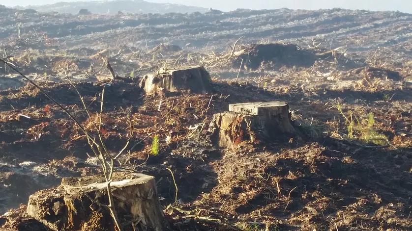 Forêts : une ressource à sauvegarder