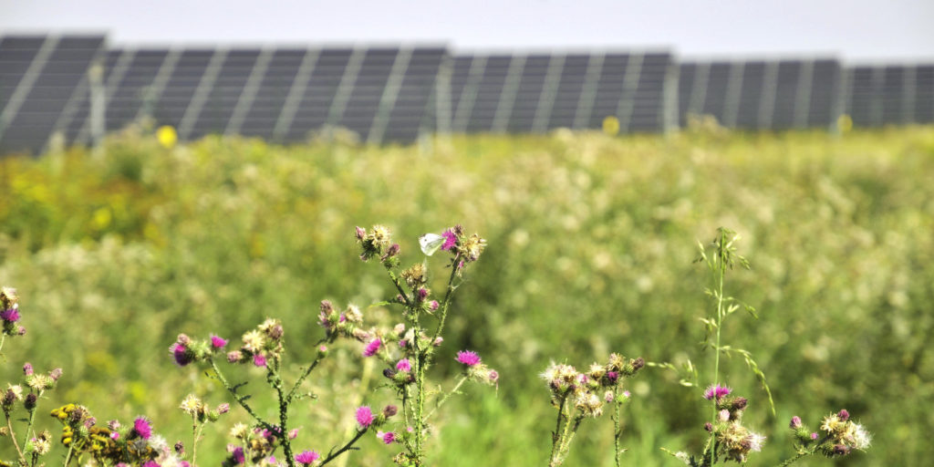 German PV tender delivers record low solar power price of €0.0355/kWh