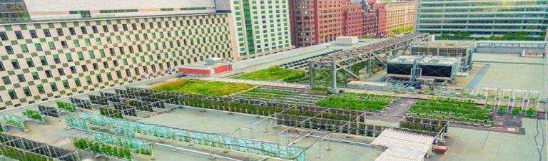 L'agriculture urbaine au service des villes en transition