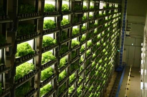 Au Japon, des «usines à légumes» en ville pour remplacer la campagne – GoodPlanet mag'