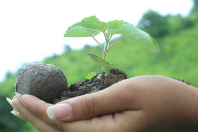 Kenya : 20 000 arbres plantés en 20 minutes avec des « bombes » de graines !
