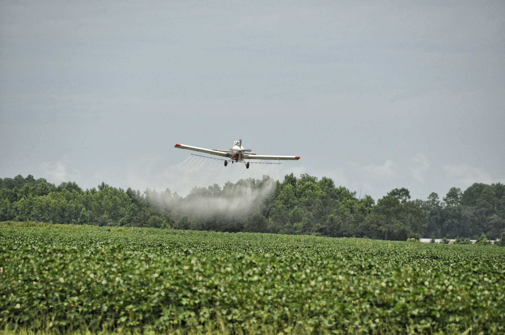Bonne nouvelle : le Conseil Constitutionnel ne cède pas au lobby des pesticides
