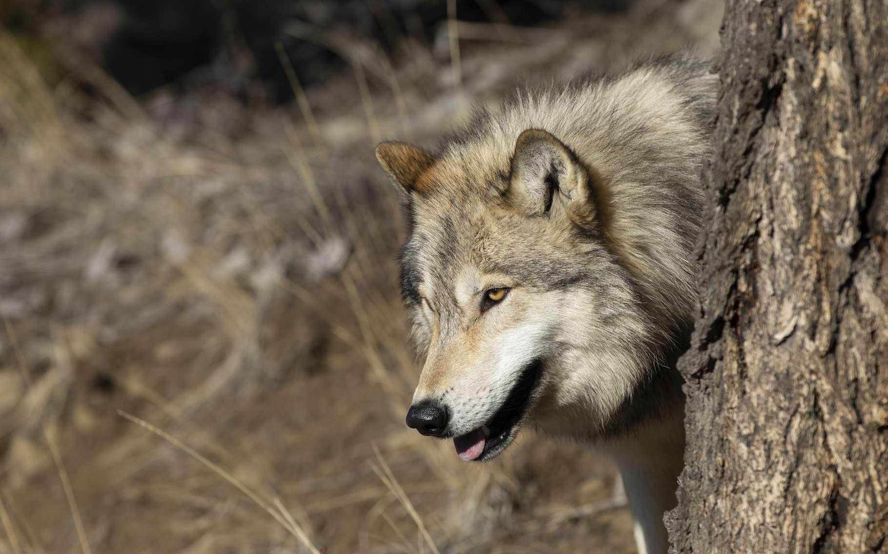 Comment le rewilding, ou réensauvagement, peut atténuer le réchauffement climatique