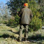 Le gouvernement veut simplifier la chasse aux sangliers et aux chevreuils l'été