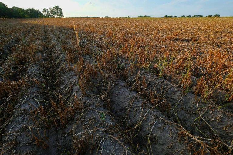 La préservation des terres agricoles, un enjeu souvent oublié lors des élections municipales