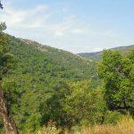 Le Massif des Maures s'engage dans un contrat de transition écologique axé sur la gestion durable de la forêt