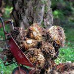 Nutella. Ferrero arrive en tête du classement du WWF pour sa gestion de l'huile de palme