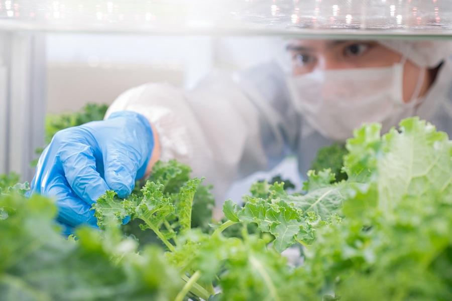 Keeping City Kitchens Stocked Through Urban Farming