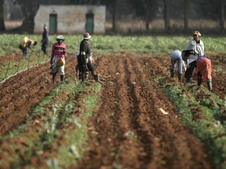 Zimbabwe : le gouvernement veut compenser les anciens fermiers expropriés en leur allouant des terres