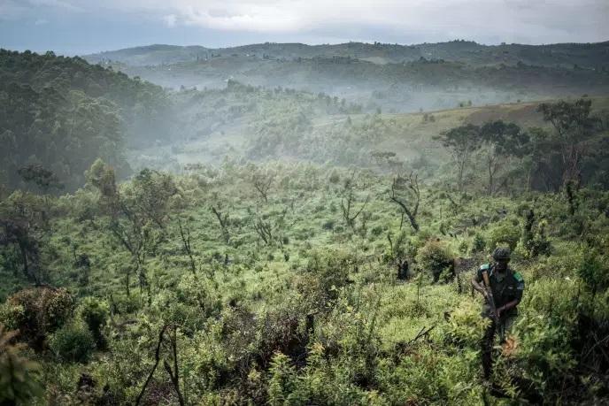 Les forêts africaines absorbent davantage de carbone que l'Amazonie