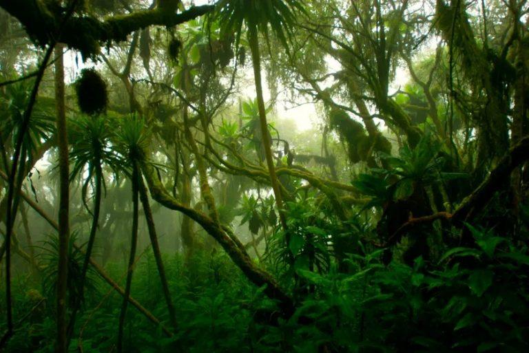 Arrivées à saturation, les forêts tropicales vont cesser d'absorber du CO2