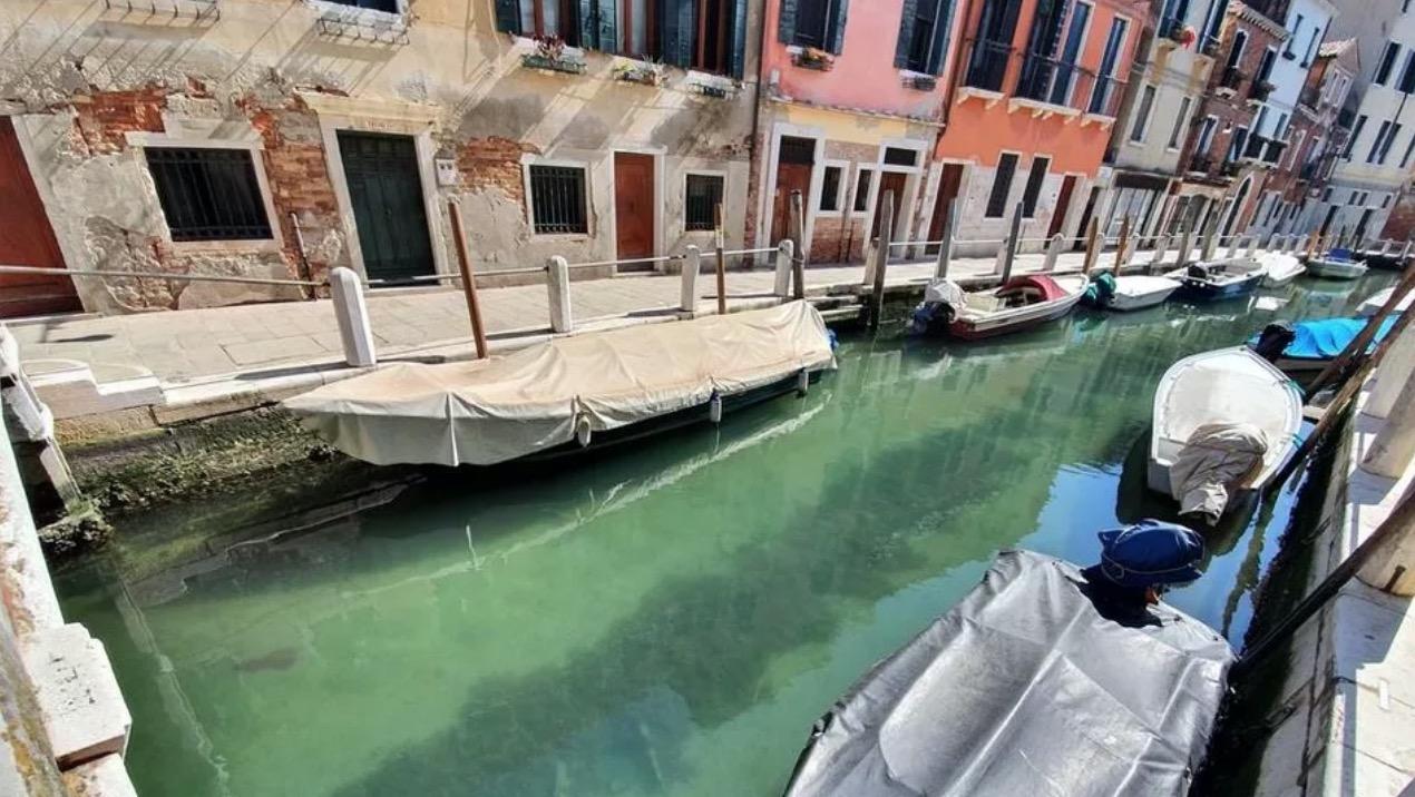 Confinement : à Venise, les eaux ont retrouvé leur clarté et les poissons reviennent