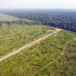 Climat. L'Amazonie pourrait disparaître en 50 ans avertissent des chercheurs