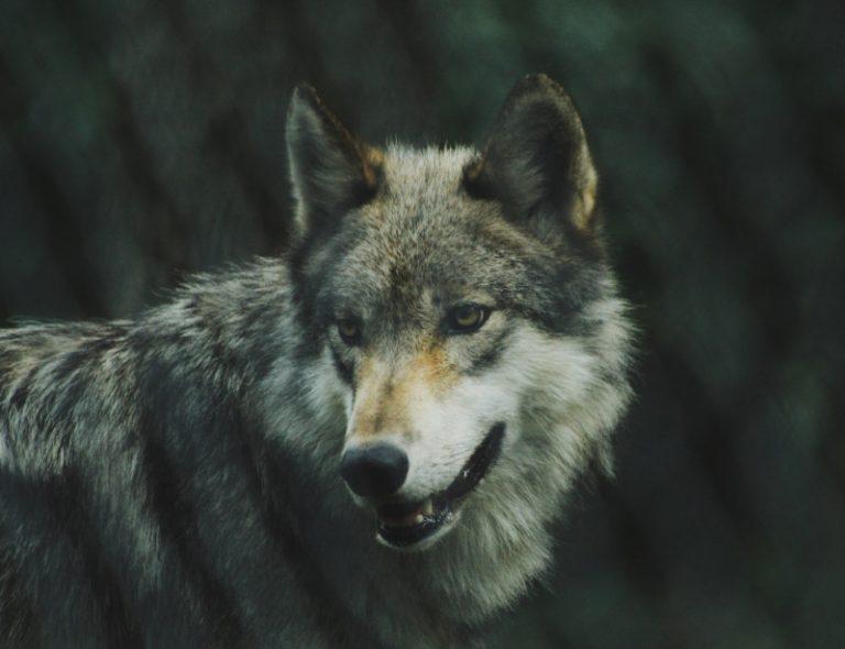Favoriser le retour des animaux sauvages en pleine nature, un combat de tous les jours