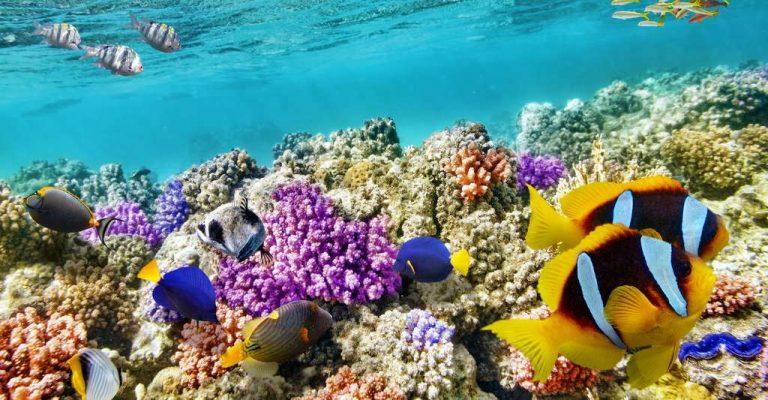 Réchauffement climatique : la biodiversité est en grand danger d'extinctions massives et brutales