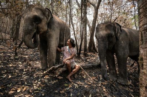 Virus: «les éléphants à touristes» en détresse en Thaïlande