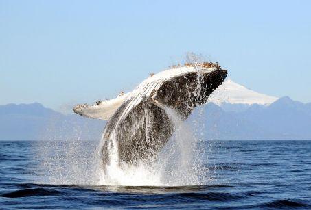 «Restaurer la vie marine d'ici 2050, un défi réaliste»