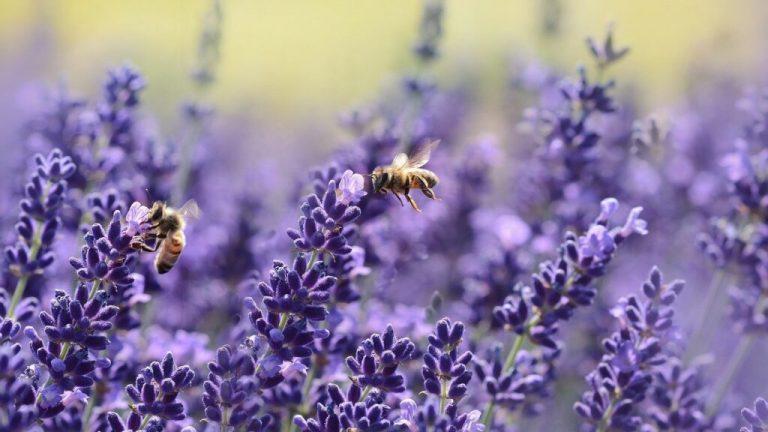25 % des insectes ont disparu en 30 ans, mais l'espoir n'est pas perdu