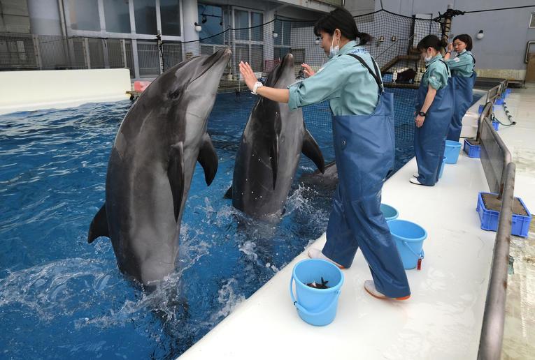 Animaux.Des dauphins-robots, l'avenir des parcs aquatiques?