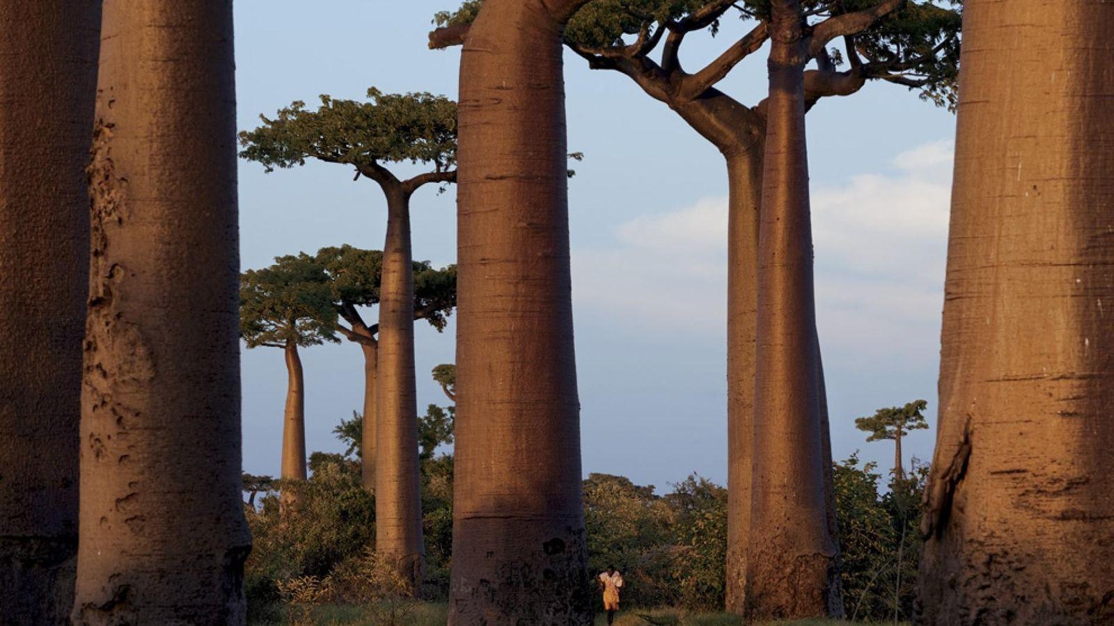 Madagascar lance un vaste projet de reforestation