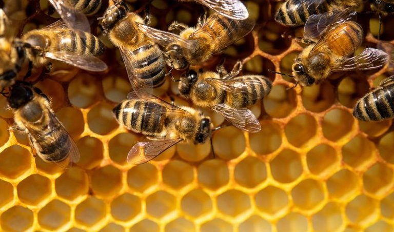Fact check: Does 5G kill bees?