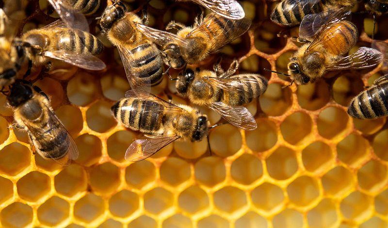 Fact check: Does 5G kill bees?