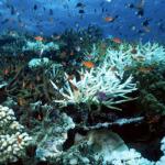 Des scientifiques développent avec succès des coraux « résistants à la chaleur » pour lutter contre le blanchissement