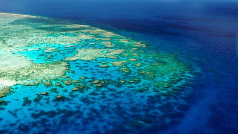 Des projets pour sauver la Grande Barrière de Corail